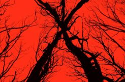 Blair Witch 2016 Film DVD Poster Found Footage